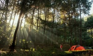 indonesia forest bathing